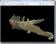 Photofly Model of fossil jaw from a Tarbosaurus bataar