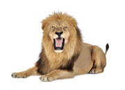 OS X Lion Roar on App Compatibility