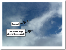 Octo-Copter gaining altitude above oblivious seagull.