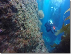 Diving at Catalina Island