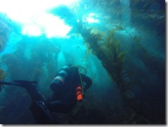 Diving in the Kelp Forest