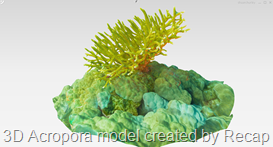 3D Acropora Model Created by Recap Photo by Sly Lee