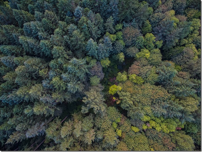 Flying Over a Forest