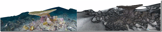 3D coral model generated from photos in Autodesk Memento.