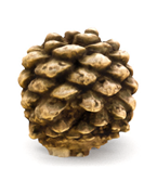 3D textured pinecone mesh.